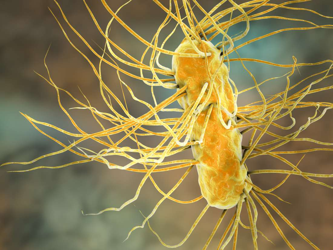 bacterial gastroenteritis causes treatment and